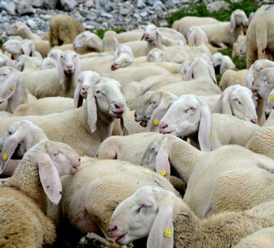 recupero lana
